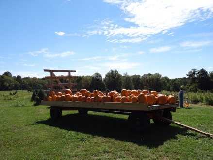 Stinesville festival and pumpkins 2014 015