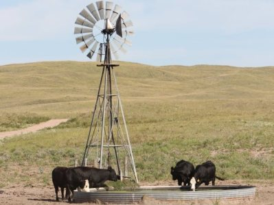 Cattle_Windmill_Water_Tank_Nebraska