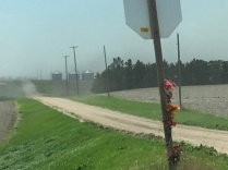 IMG_2423-dust-windbreak-road