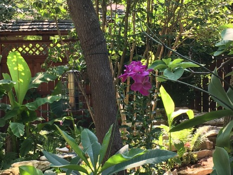 IMG_2710 (1)-Orchid