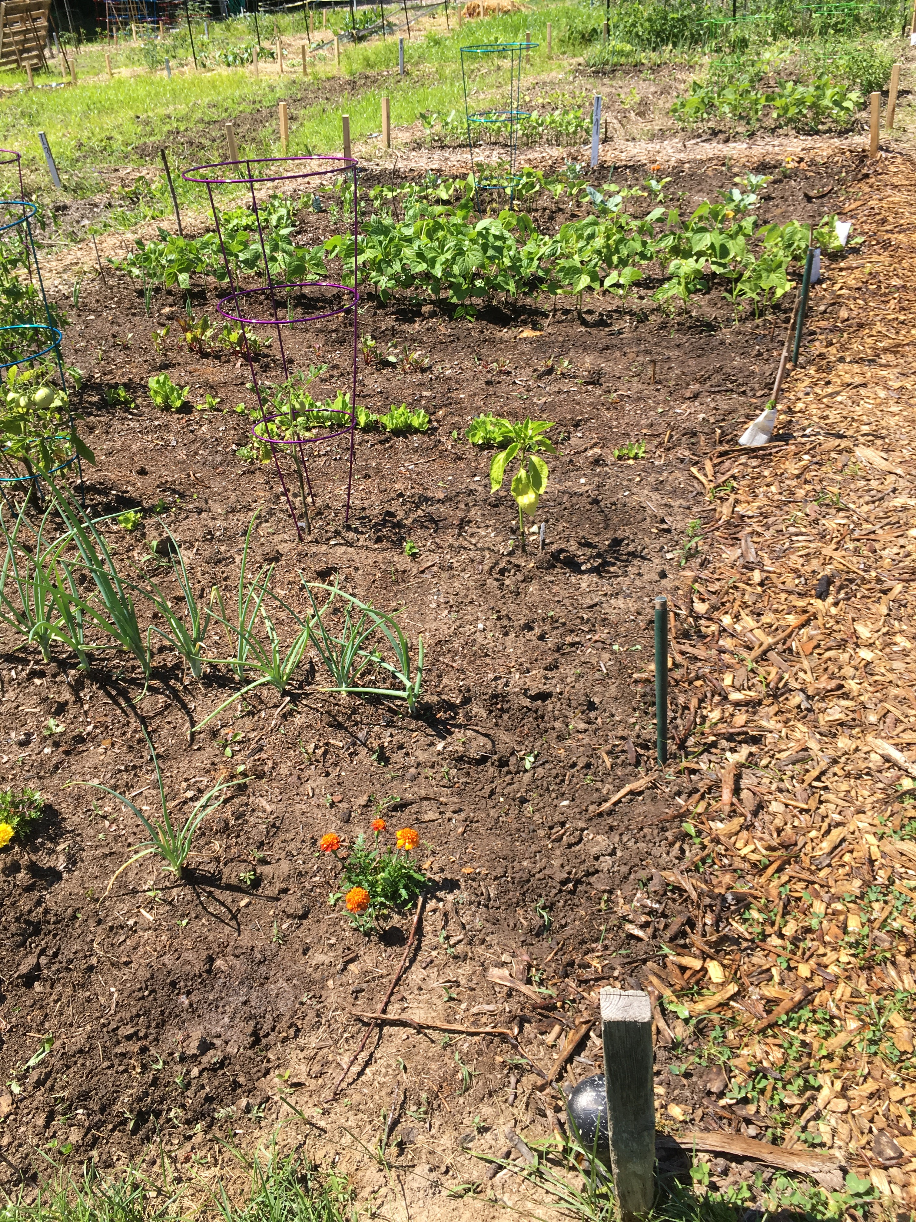 Summer fun in Bloomington–visitors, limestone, and gardens   Knit ...